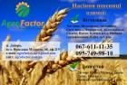 Семена пшеницы Богдана, Подолянка, Фаворитка (Элита / 1 реп.)