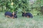 Кролики разных пород, племенные