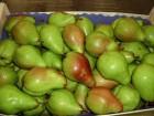 Груши из Испании