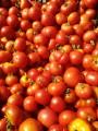 Продам помидоры г.Лозовая