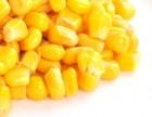 Кукурудза: закупівля у великих об'ємах по всій території України