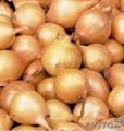 Продам лук севок Штутгартер  Ризен на выгонку пера от 20кг