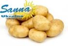 Картофель семенной Ривьера, Тирас и другие со склада в Виннице