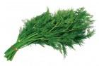 Продам свежую качественную зелень по оптовым ценам