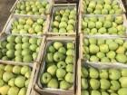 Продажа яблок: Голден,Ред Джонапринц, Чемпион, Джонагоред Супра.