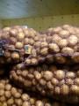 Продам картоплю насінневу по 3,5 грн.