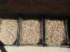 Озимый чеснок-семена