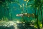 Речная свежая и свежемороженая рыба оптом в ассортименте: густера, пло