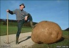 Продам сільську картоплю