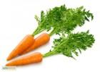 Торгова компанія шукає оптового постачальника моркви в Україні
