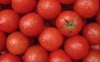 Торговій компанії потрібні оптові постачальники помідорів в Україні