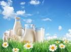 молочные продукты от производителя: молоко, сметана, кефир, йогурты.