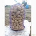 продам картоплю Белоросса