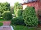 —аженцы разных деревьев с доставкой и посадкой