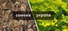 Продам семена укропа в ассортименте, опт и розница