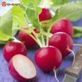 Продам семена редиски круглая красная в ассортименте, оптом и в ро