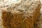 Продам солому пшеничную в тюках СРОЧНО!