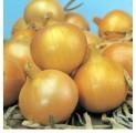 Продам лук посадочный на зиму (тыканка) сортовой Рэйдер