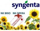Подсолнечник посевной Syngenta NK BRIO, NK OPERA урожая 2015 года