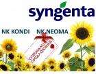 Подсолнечник посевной Syngenta NK NEOMA, NK KONDI урожая 2015 года