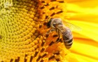 """Продам мед """"разнотравье"""" со своей загородной пасеки"""