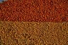 Просо  Створені сорти: | Полтавське золотисте | Золушка | Біла альтанк