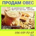 Продам оптом  овес 600 кг (по 2.5 грн), м.Золочів Львівська обл