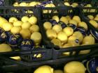 Лимоны опт с Турции