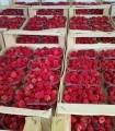 Продам свежую ягоду малину оптом доставка по Украине