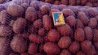 Продам посадкову картоплю Аладін