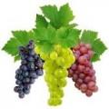 Закупаем виноград урожая 2017