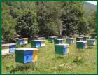 Продам мёд воск мерва