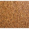 продам пшеницю  30т самовивіз пшениця не віяна з під комбайна суха