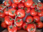 Продажа помидоров. Всегда свежие. Оптом.