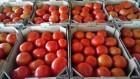 Тепличні томати від виробника