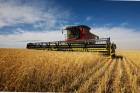 Производим закупку с/х продукции - пшеницу разноклассовую - Превью изображения 2