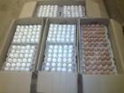 Продам яйца куринийи