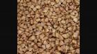 Продам семена гречихи Сумчанка