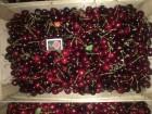 Продам черешню сортів Чкаловка і Мелітопольська - Превью изображения 1