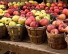 Куплю яблука на переробку.