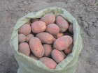 Продам картоплю велику белларосса