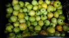 Продам помидор со склада в Киевской обл.