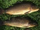 Продам свежую рыбу оптом