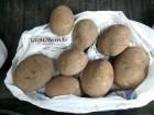 Картофель оптом, картошка 5+