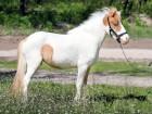 в продаже шикарная пони Мрабелла - Превью изображения 2
