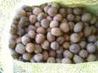 грецкий орех в скорлупе
