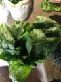 В ассортименте петрушка, укроп, лук, салат, руккола, шпинат