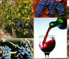 продам свои, домашние вина из ягодного сырьясырья.