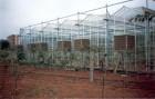 Охлаждение воздуха для теплиц, парников, производственных помещений
