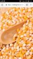 Закупаем кукурузу любой влаги цена договорная